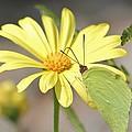 Butterfly On Daisy by Cynthia Guinn
