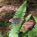 Butterfly On Fern by Aimee L Maher ALM GALLERY