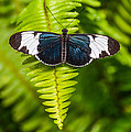 Butterfly On Fern by Michael Moriarty