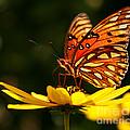 Butterfly On Flower by Joan McCool