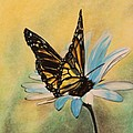Butterfly On Flower by Michelle Miron-Rebbe