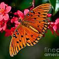 Butterfly On Flower by Stephen Whalen