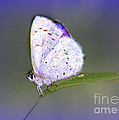 Butterfly On Grass by Irina Hays