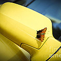 Butterfly On Sports Car Mirror by Elena Elisseeva