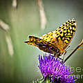 Butterfly On Thistle by Cheryl Baxter