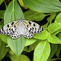 Butterfly Perching On Leaf In A Garden by Panoramic Images