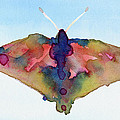 Butterfly Pink Yellow Blue Watercolor Art Print by Beverly Brown