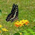 Butterfly by Pritesh Divekar