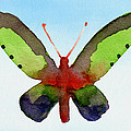Butterfly Purple And Green Watercolor Art Print by Beverly Brown
