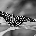 Butterfly Resting by Ron White