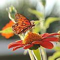 Butterfly  by Robert  Johnston