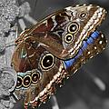 Butterfly Spot Color 1 by Bob Slitzan