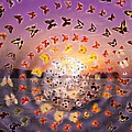 Butterfly Sunset by Anne Cameron Cutri