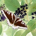 Butterfly - Swallowtail - Photopower 140 by Pamela Critchlow