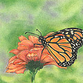 Butterfly by Troy Levesque