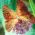 Butterfly Twins by Kerri Farley