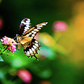 Butterfly Two by Steven Llorca