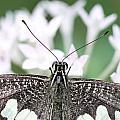 Butterfly View by Ramabhadran Thirupattur