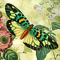 Butterfly Visions-a by Jean Plout