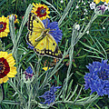 Butterfly Wildflowers Spring Time Garden Floral Oil Painting Green Yellow by Walt Curlee