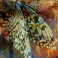 Butterfly Wings by Amanda Moore