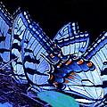 Butterfly Wings by Rita Mueller