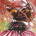 Butterfly With Coneflower by Alfred Ng