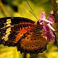 Butterfly With Flower by Joan Gal-Peck
