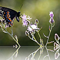 Butterfly With Reflection by Eleanor Abramson