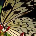 Butterfly World by Renette Louw