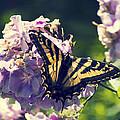 Butterfly by Yulia Kazansky