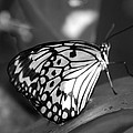 Butterfly7 by Rob Hans