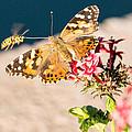 Butterfly's Friend by John Ferrante