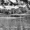 Bw Lake Views  by Chuck Kuhn