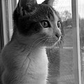 Bw The Inquisitive Kitty Jackson by Thomas Woolworth