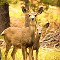 By Mama's Side - Photo Manipulation - Mule Deer - Casper Mountain - Casper Wyoming by Diane Mintle