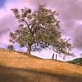 By The Big Oak by Tom Wooldridge