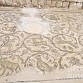 Byzantine Mosaic Depicting Animals And Hunting Scenes. by Shay Levy