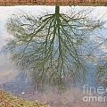 C And O Canal Tree Reflection by Rrrose Pix
