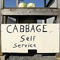 Cabbage Self Service by Tana Reiff