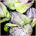 Cabbage by Sherry Ross