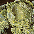Cabbage Still Life by Vincent Yorke
