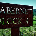Cabernet Block 4 by Tracy Evans