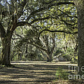 Cabin And Live Oaks by David Waldrop