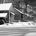 Cabin Fever In Black And White by Paul Ward