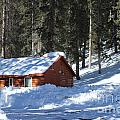 Cabin On Grand Mesa Co by Dale Jackson