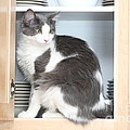 Cabinet Cat by Michelle Powell