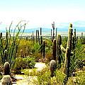 Cacti Garden by Darrell Clakley