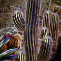 Cacti Lights by Kelley King