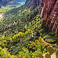 Cacti View Of Zion by Silken Photography